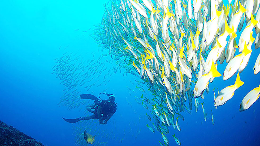 The exceptionally clear waters when diving in Cabo Verde
