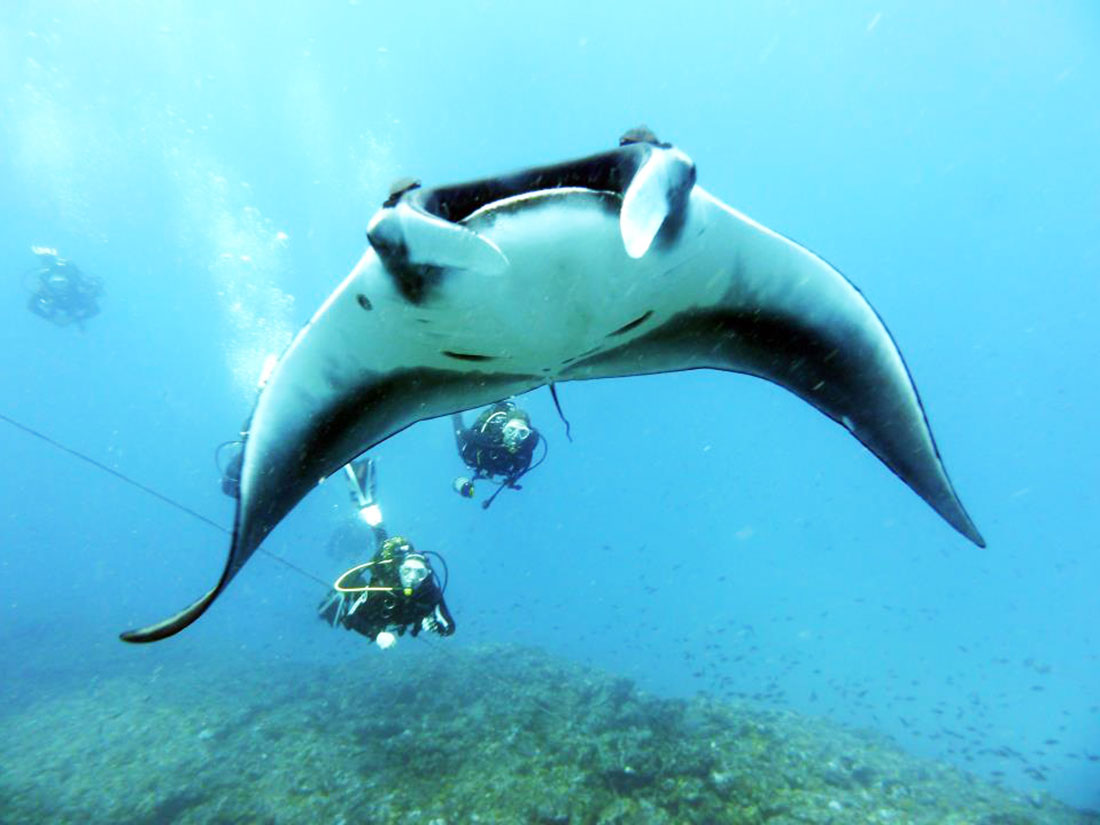 Diving in Cabo Verde to see small fish and big