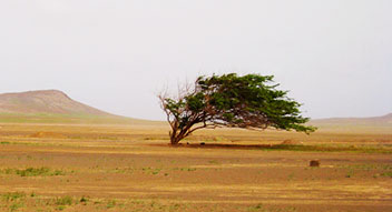 Cabo Verde Wind every day
